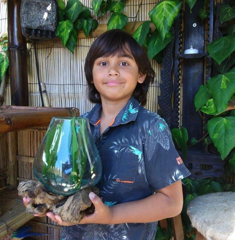 8 Wurzelholz Unikat Glas Vasen Design Gamal Blumenvase Dekoration GR M