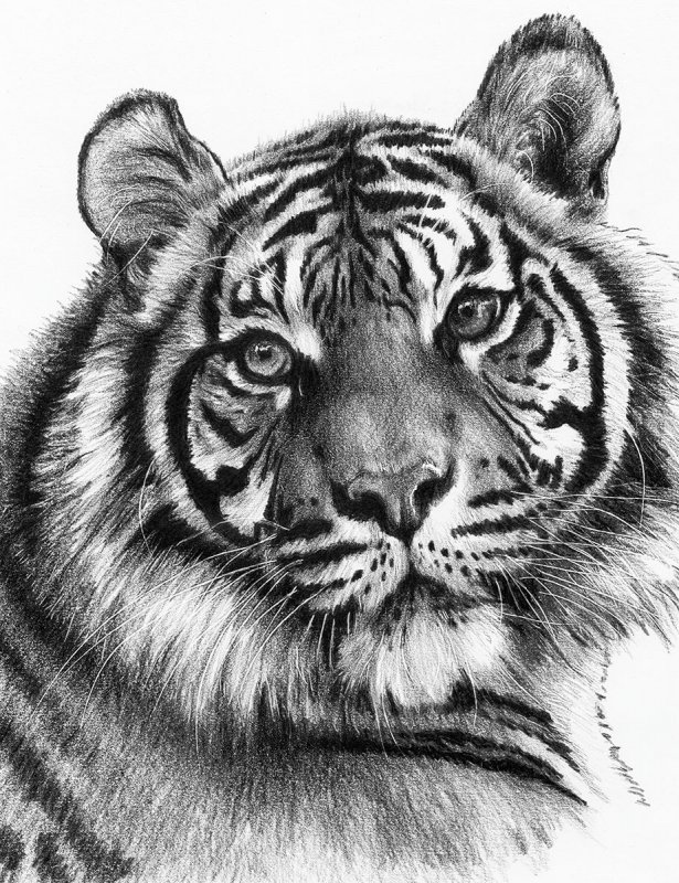 sketching  skizzieren  malen mit bleistift  weißer