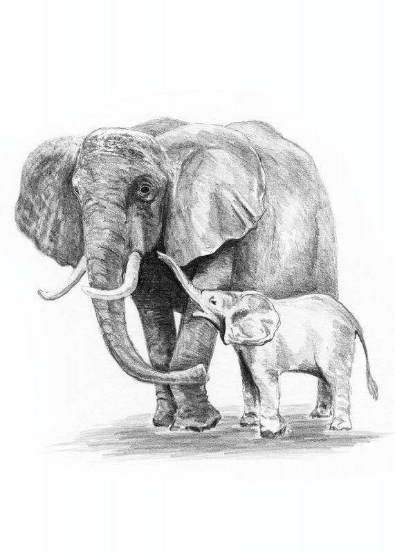 sketching  skizzieren  malen mit bleistift  elefant mit