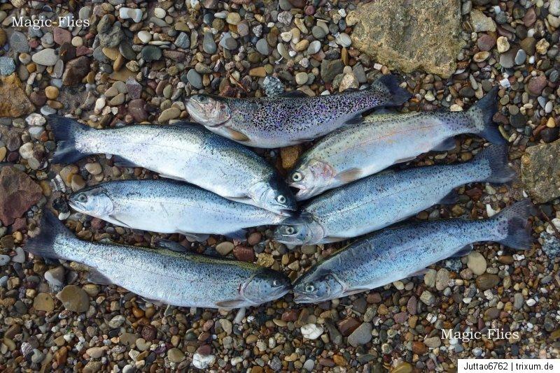 4 St Goldkopf PINKI Nymphen # 10 Top Killer-Nymphe Saibling Forelle Put /& Take